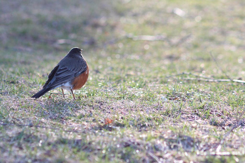 oiseau 85mm